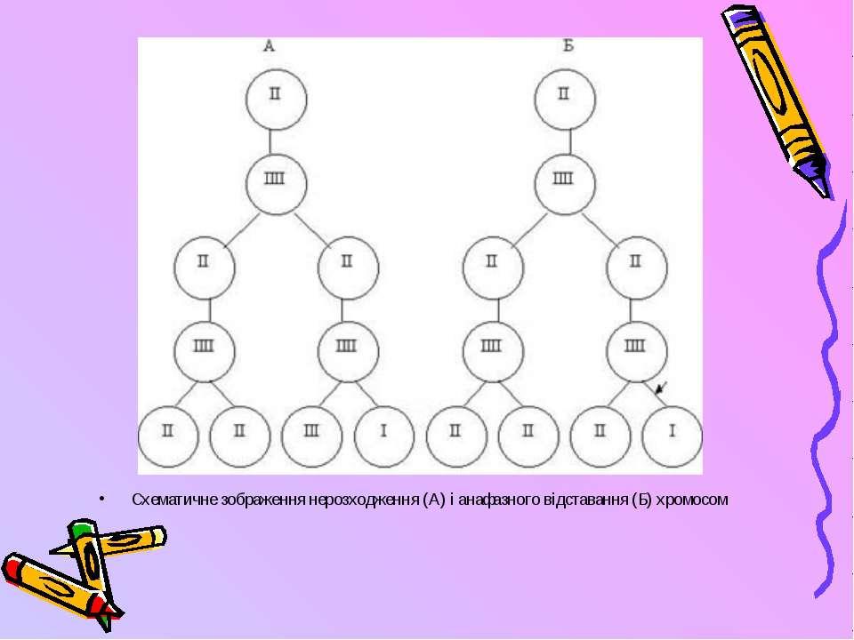 Схематичне зображення нерозходження (А) і анафазного відставання (Б) хромосом
