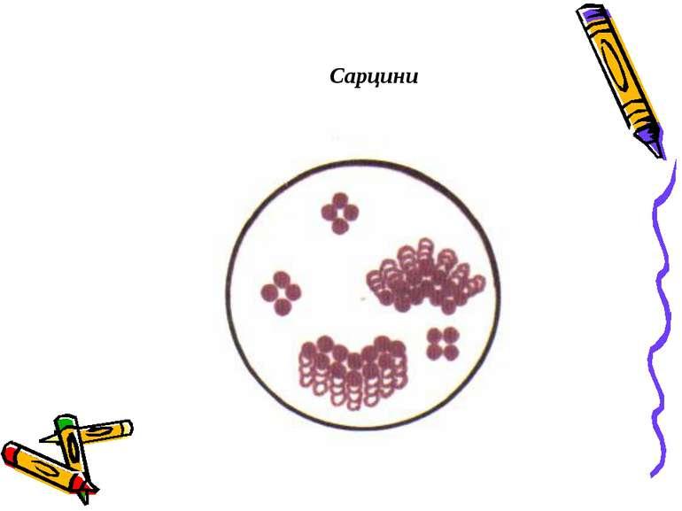 Сарцини