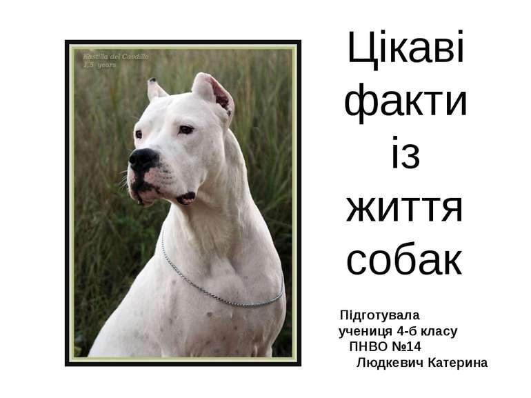 Цікаві факти із життя собак Підготувала учениця 4-б класу ПНВО №14 Людкевич К...