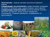 Лісостепова – більша частина лісостепу й прилеглі райони Спеціалізація рослин...