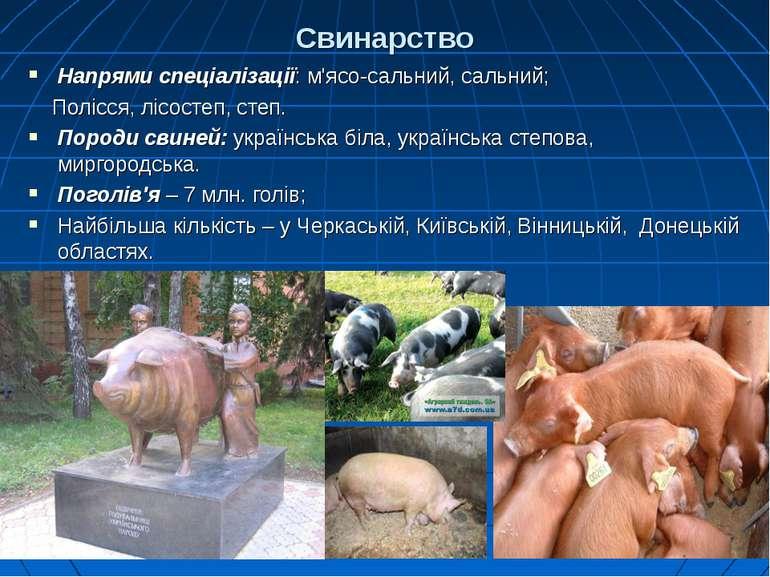 Свинарство Напрями спеціалізації: м'ясо-сальний, сальний; Полісся, лісостеп, ...