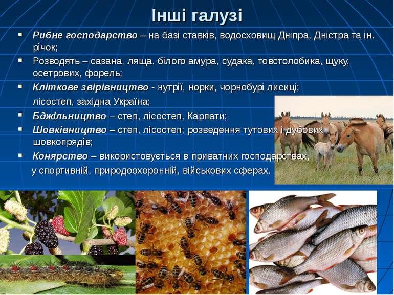Інші галузі Рибне господарство – на базі ставків, водосховищ Дніпра, Дністра ...