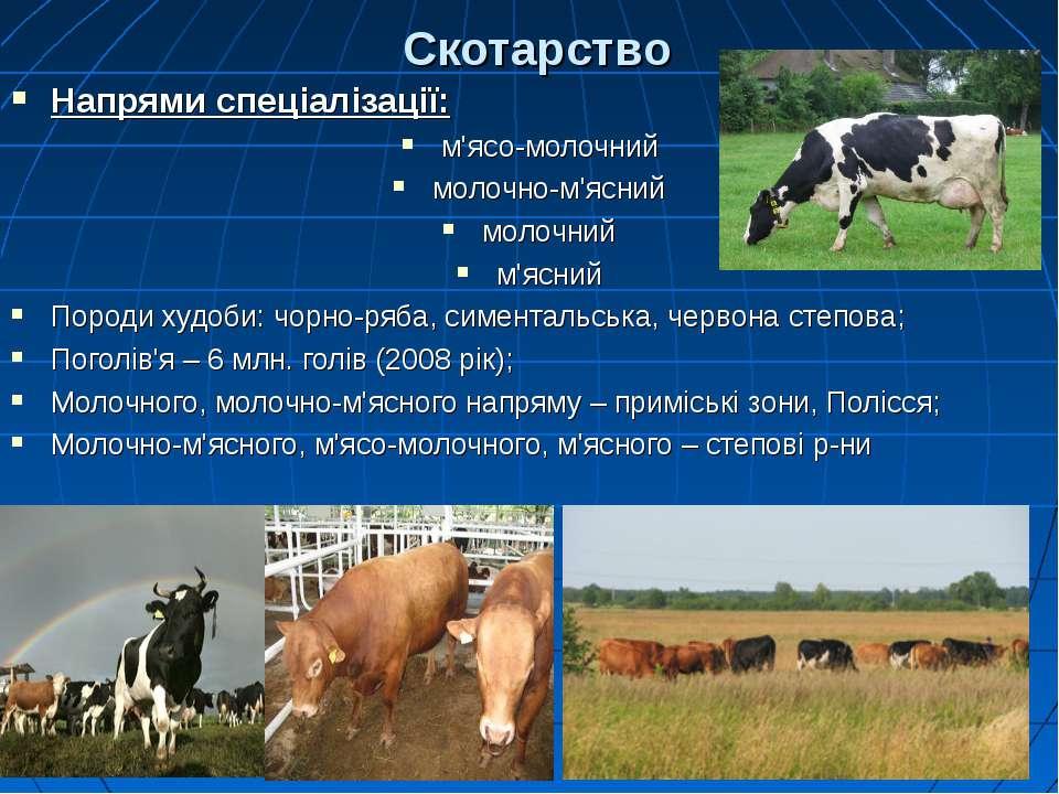 Скотарство Напрями спеціалізації: м'ясо-молочний молочно-м'ясний молочний м'я...