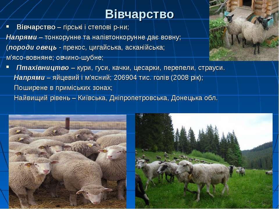 Вівчарство Вівчарство – гірські і степові р-ни; Напрями – тонкорунне та напів...