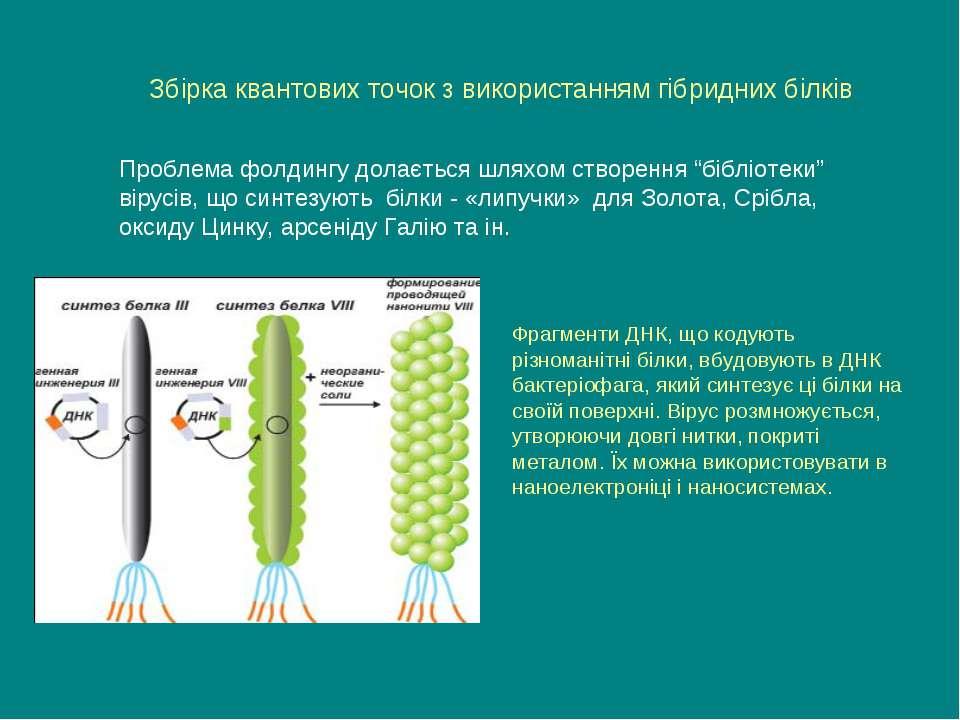 Фрагменти ДНК, що кодують різноманітні білки, вбудовують в ДНК бактеріофага, ...
