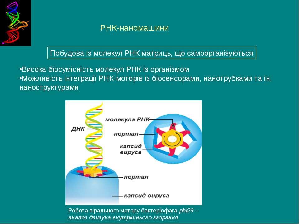 РНК-наномашини Робота вірального мотору бактеріофага phi29 – аналог двигуна в...