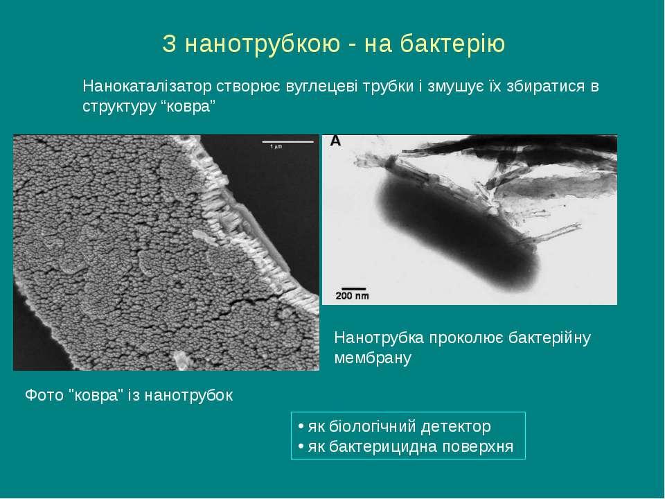 """З нанотрубкою - на бактерію Фото """"ковра"""" із нанотрубок Нанотрубка проколює ба..."""