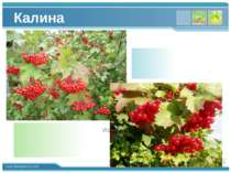 Калина Please write down of a slogan for a vision of a company in shortly. Pl...