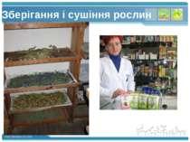Зберігання і сушіння рослин www.themegallery.com