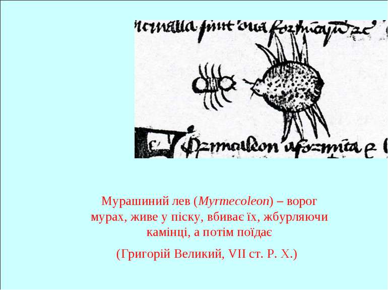 Мурашиний лев (Myrmecoleon) – ворог мурах, живе у піску, вбиває їх, жбурляючи...