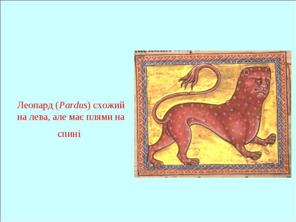 Леопард (Pardus) схожий на лева, але має плями на спині