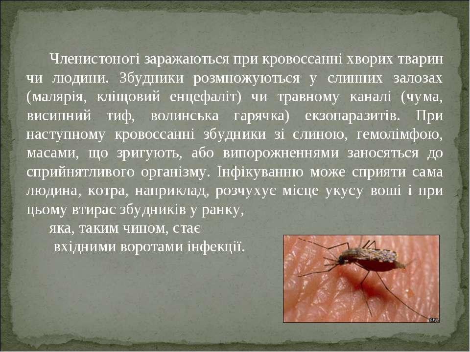 Членистоногі заражаються при кровоссанні хворих тварин чи людини. Збудники ро...