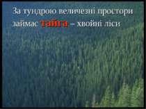 За тундрою величезні простори займає тайга – хвойні ліси