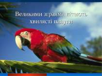 Великими зграями літають хвилясті папуги