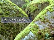 Поширені мохи