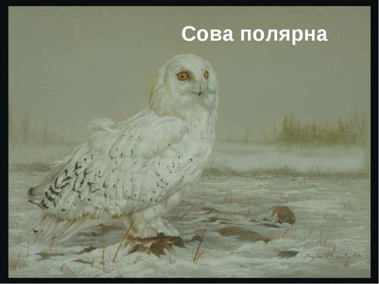Сова полярна