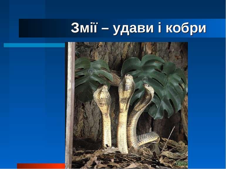 Змії – удави і кобри кобра
