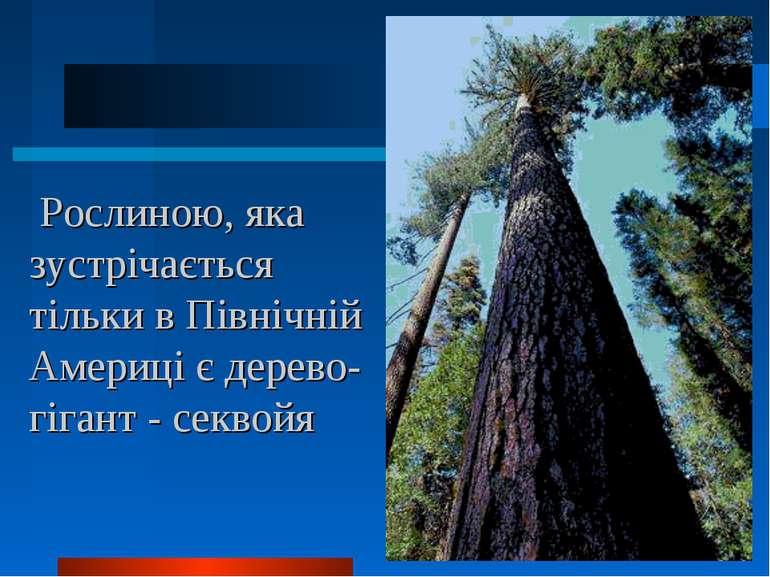 Рослиною, яка зустрічається тільки в Північній Америці є дерево-гігант - секвойя