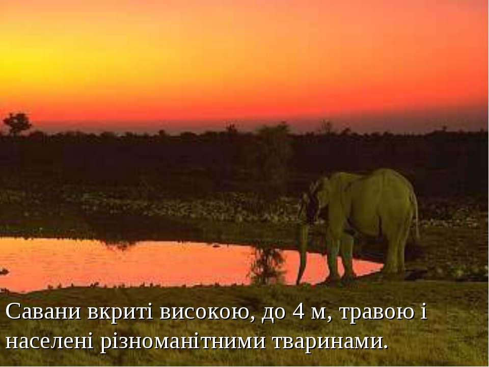 Савани вкриті високою, до 4 м, травою і населені різноманітними тваринами.