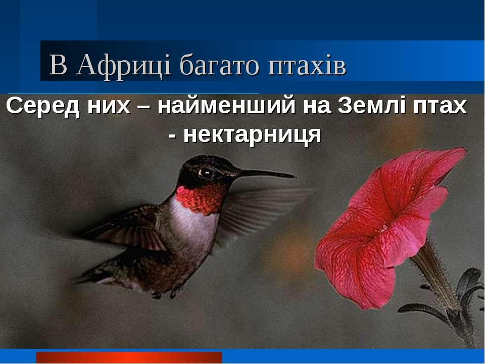 В Африці багато птахів Серед них – найменший на Землі птах - нектарниця