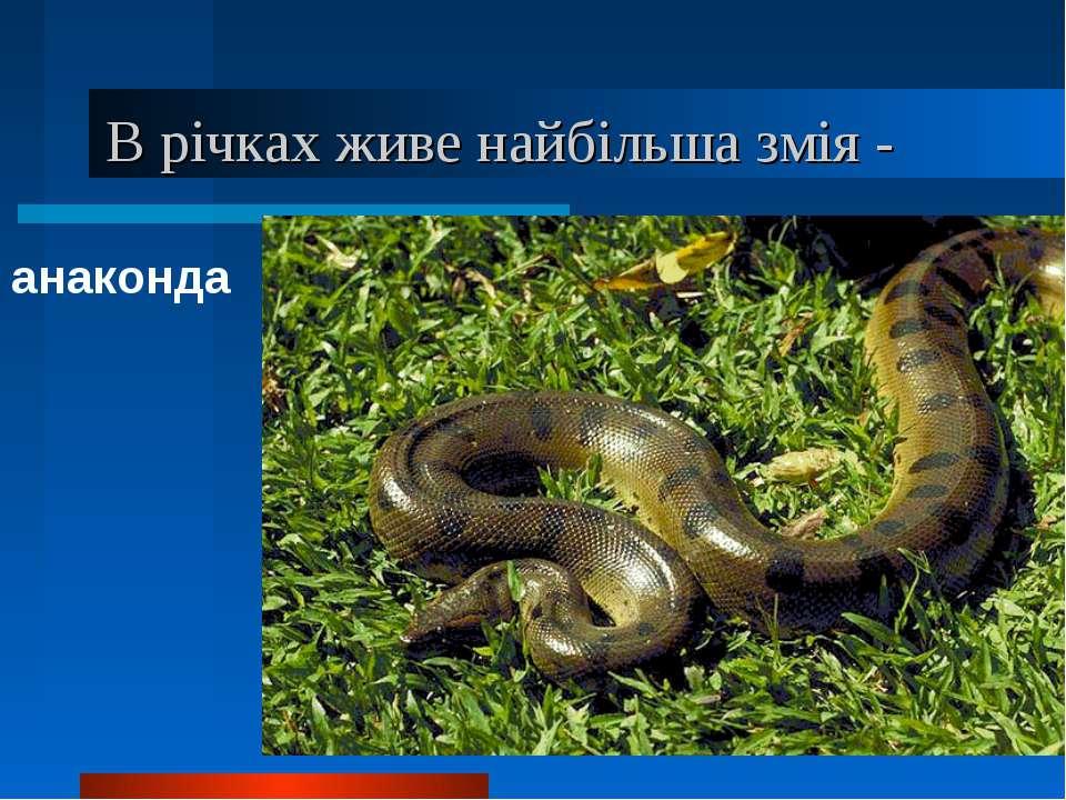 В річках живе найбільша змія - анаконда