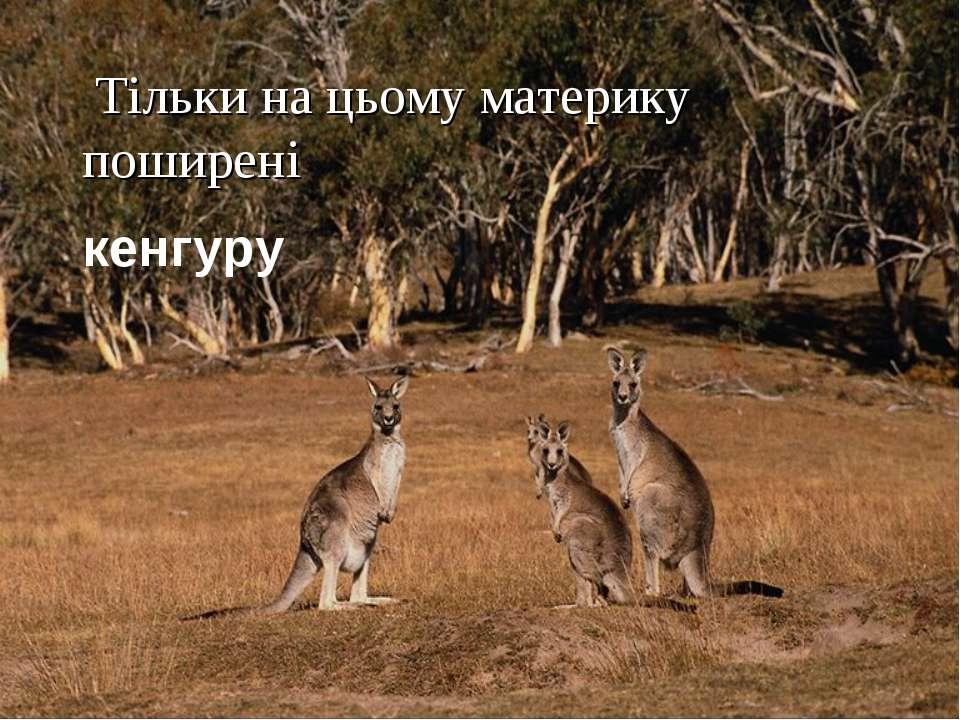 Тільки на цьому материку поширені кенгуру