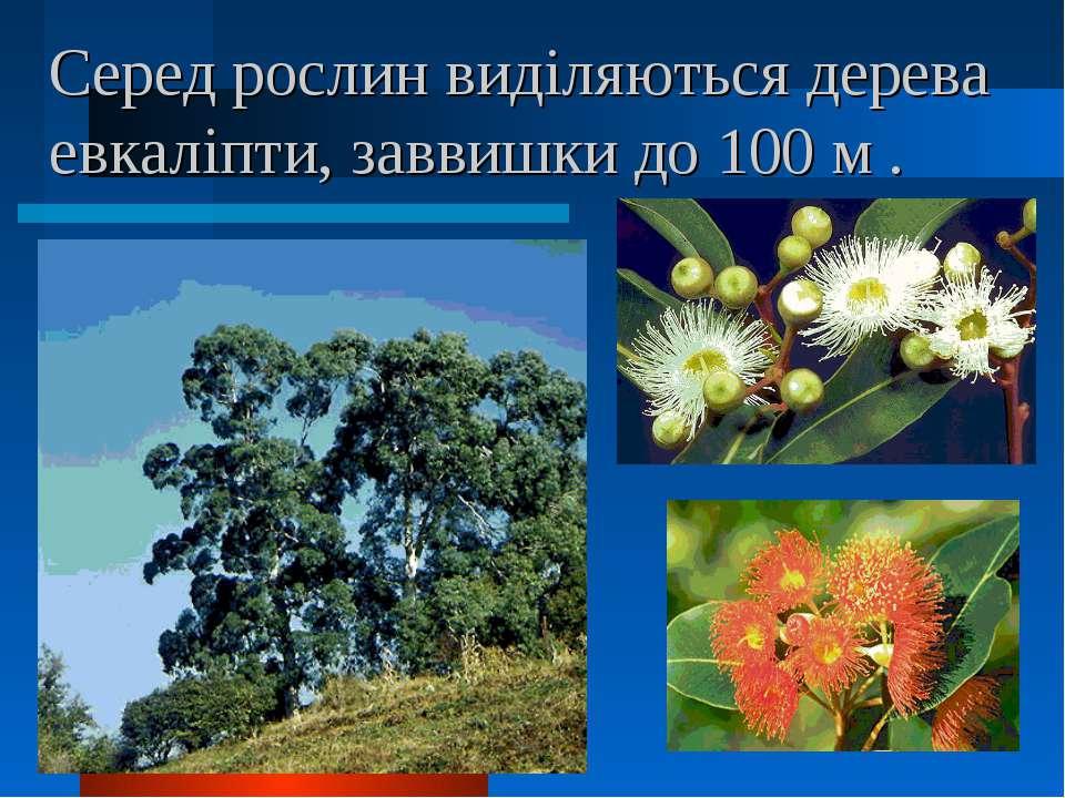 Серед рослин виділяються дерева евкаліпти, заввишки до 100 м .