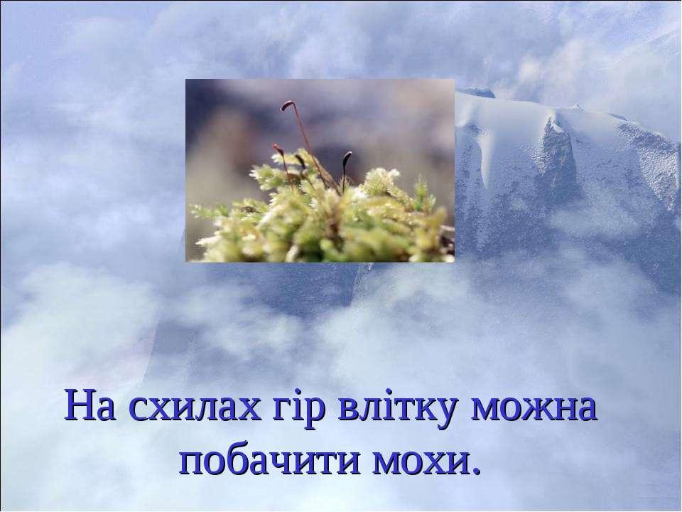 На схилах гір влітку можна побачити мохи.