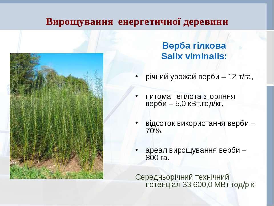 Вирощування енергетичної деревини Верба гілкова Salix viminalis: річний урожа...
