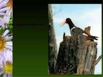 Кулик-сорока стоїть на гнізді Люботинська гімназія №1 Люботинська гімназія №1