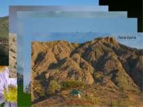Карадаг. Біостанція Зимородок на камені Пара сріблястих чайок Хохлаті баклани...