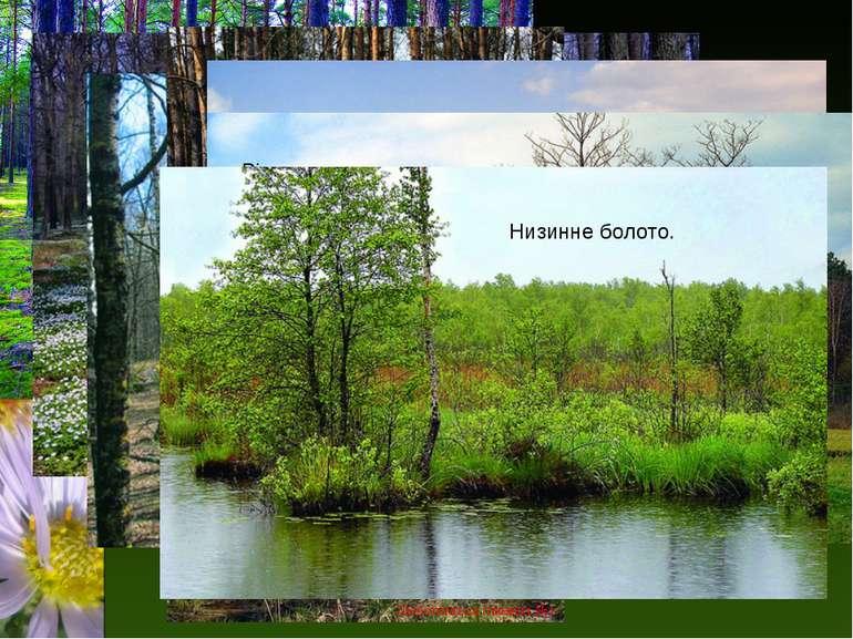 Сосново-березовий ліс заповідника. Сосновий ліс заповідника весною. Вихід на ...