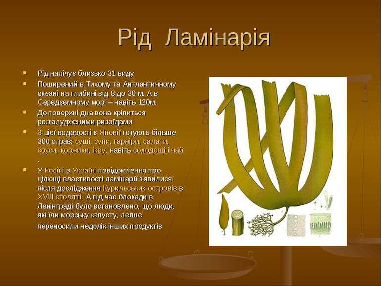 Рід Ламінарія Рід налічує близько 31 виду Поширений в Тихому та Антлантичному...