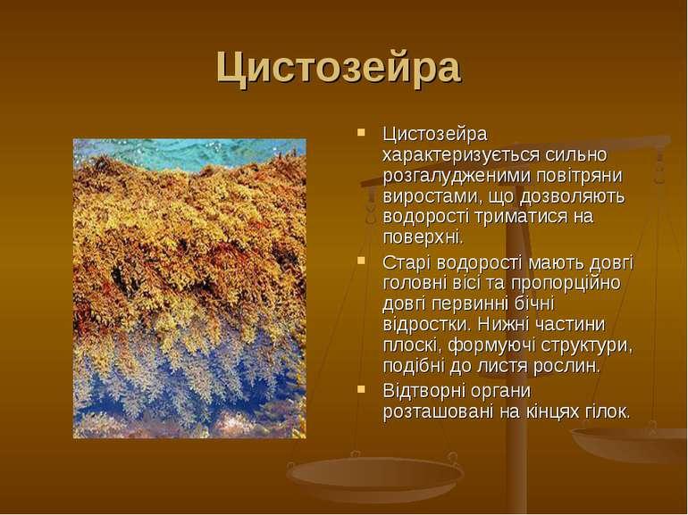 Цистозейра Цистозейра характеризується сильно розгалудженими повітряни вирост...