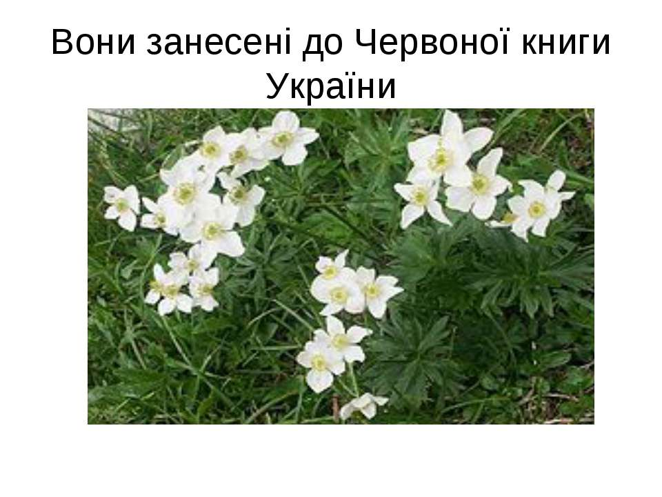 Вони занесені до Червоної книги України