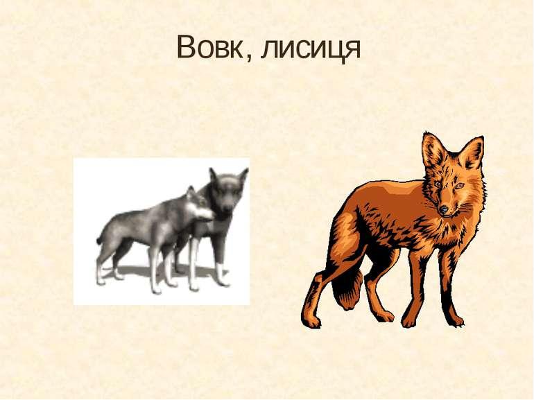 Вовк, лисиця