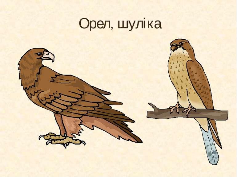 Орел, шуліка