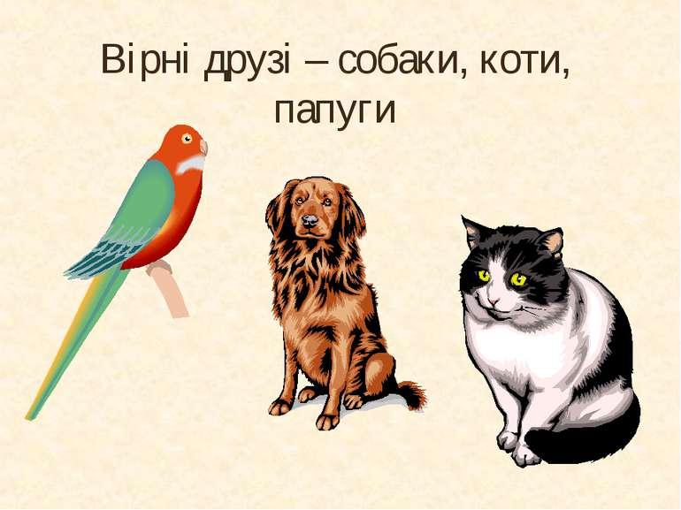 Вірні друзі – собаки, коти, папуги