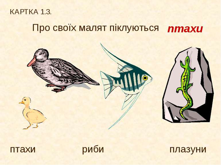 КАРТКА 1.3. Про своїх малят піклуються птахи риби плазуни птахи