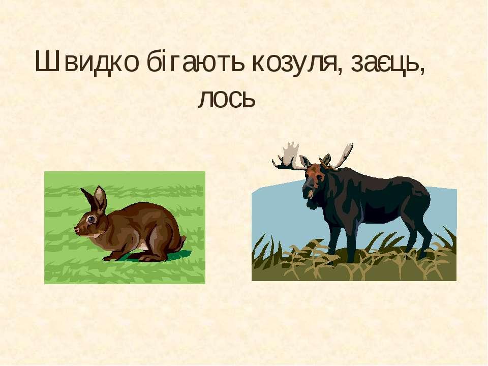 Швидко бігають козуля, заєць, лось