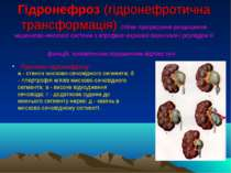 Гідронефроз (гідронефротична трансформація) стійке прогресуюче розширення чаш...