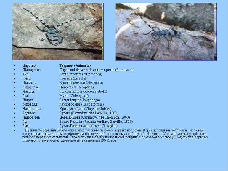 Царство: Тварини (Animalia) Підцарство: Справжні багатоклітинні тварини (Eume...
