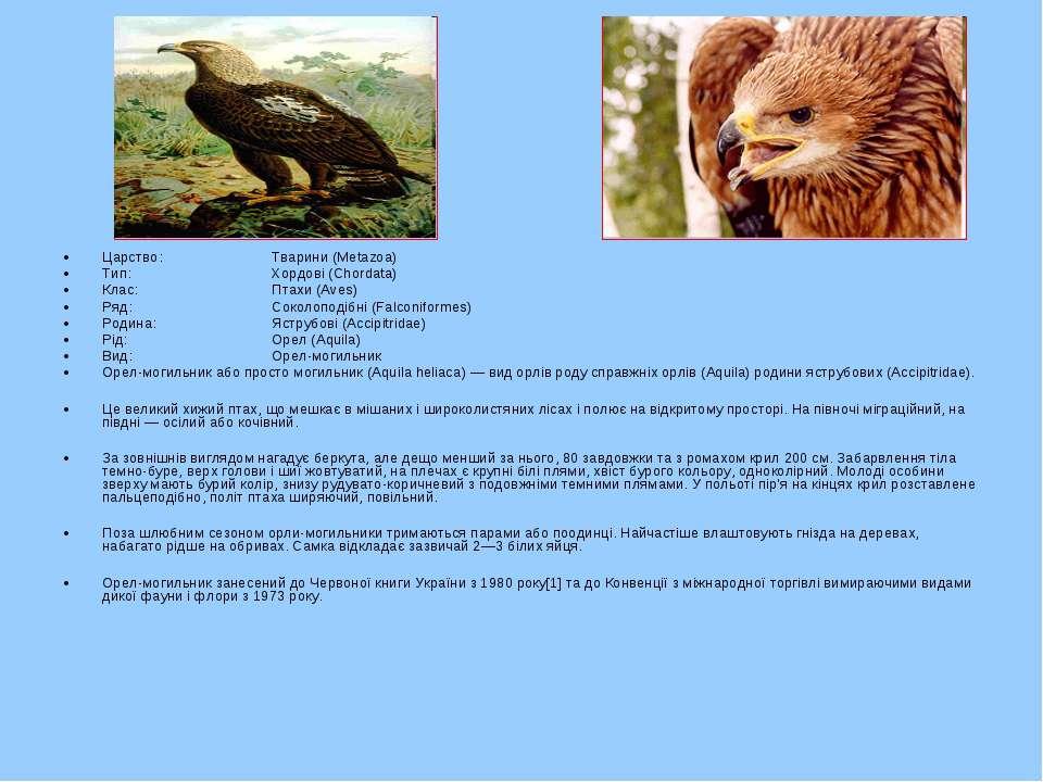 Царство: Тварини (Metazoa) Тип: Хордові (Chordata) Клас: Птахи (Aves) Ряд: Со...