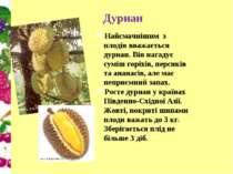 Дуриан Найсмачнішим з плодів вважається дуриан. Він нагадує суміш горіхів, пе...