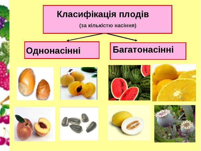 Класифікація плодів (за кількістю насіння) Однонасінні Багатонасінні