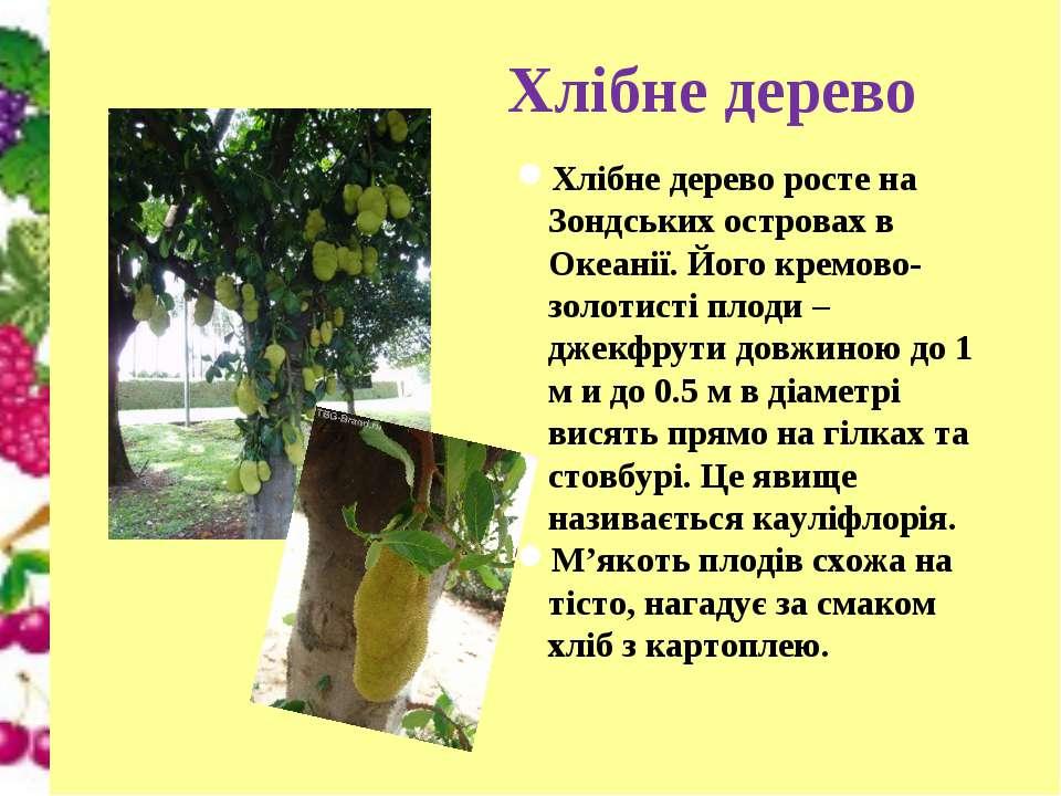 Хлібне дерево Хлібне дерево росте на Зондських островах в Океанії. Його кремо...