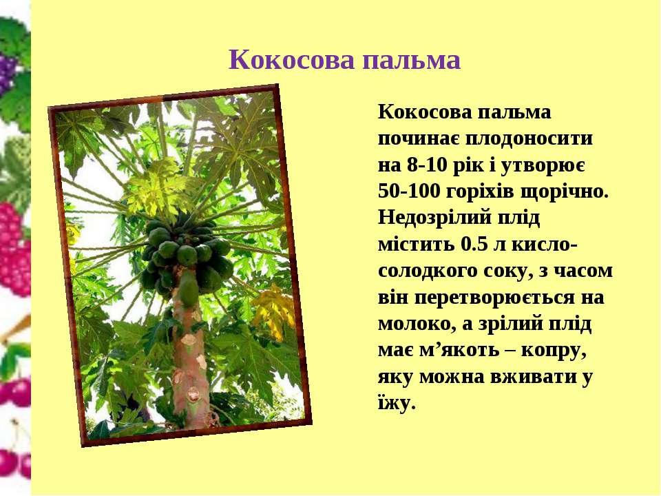 Кокосова пальма Кокосова пальма починає плодоносити на 8-10 рік і утворює 50-...