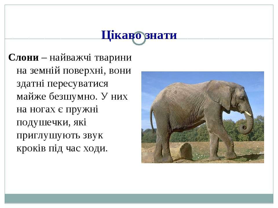 Цікаво знати Слони – найважчі тварини на земній поверхні, вони здатні пересув...