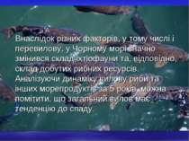 Внаслідок різних факторів, у тому числі і перевилову, у Чорному морі значно з...