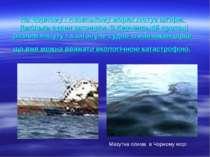 На Чорному і Азовському морях лютує шторм. Декілька суден затонули. В Керченс...